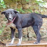 Nakao, Chien à adopter