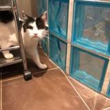 Hercule, Chat à adopter