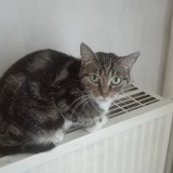 Naja, Chat européen à adopter