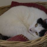 Pimousse, Chien à adopter