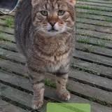 Sanji, Chat à adopter