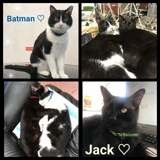 Jack et batman, Chat à adopter