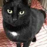 Grosminet, Chat à adopter