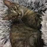 Opaline, Chat à adopter