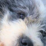 Borgho, Chien à adopter