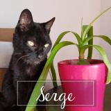 Serge, Chat européen à adopter