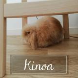Kinoa, Animal à adopter