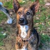 Rous, Chien à adopter