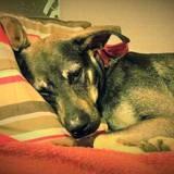 Spoke, chien mâle croisé créole, Chien à adopter