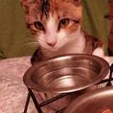Jana, Chaton à adopter