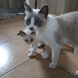 Myosotis & nutella, Chat à adopter