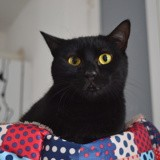 Méli, Chat européen à adopter