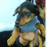 Anela, Chiot à adopter