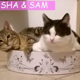 Sasha et sam inséparables, Chat à adopter