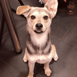 Luc, Chien à adopter