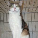 Chupa, Chat européen à adopter
