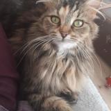 Majuscule, Chat à adopter