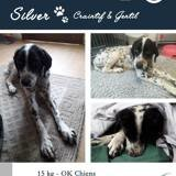 Silver, Chien à adopter
