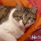 Hector, Chat à adopter