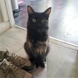 Blackie, Chaton européen à adopter