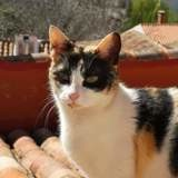 Mery, Chat à adopter