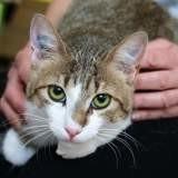 Pitchou, Chaton à adopter