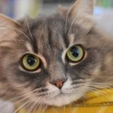 Newton, Chat à adopter