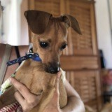 Timon, Chien à adopter