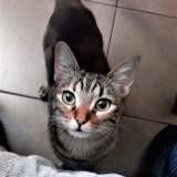 Dinah, Chaton à adopter