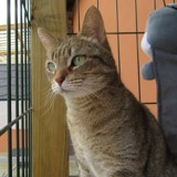 Djoko, Chat à adopter