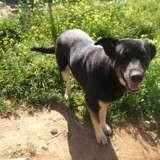 Manzana, Animal à adopter
