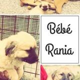 Rania, Chiot à adopter