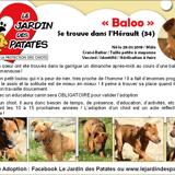 Baloo, Chiot à adopter