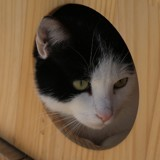 Marius, Chat gouttière à adopter