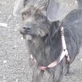 Loona, petite chienne croisée créole., Chien à adopter