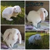 Gedeon, Animal à adopter