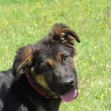 Woody, Chiot à adopter