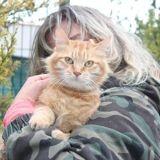 Jaba, Chat à adopter