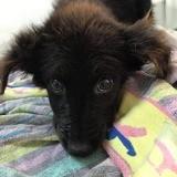 Olivia, Chiot à adopter