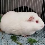 Titi, Animal à adopter