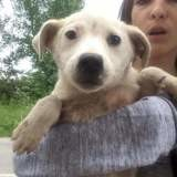 Adoption Chiot Ile De France