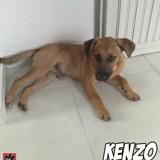 Kenzo, Chiot à adopter