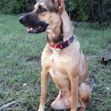 Baya, chienne croisée créole tripatte, Chien à adopter