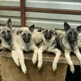 Petite famille, Chiot à adopter