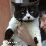 Urgence chats de sotchi, russie, Chat européen à adopter