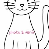 Nanouche, Chat européen à adopter