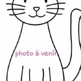 Poussy, Chaton européen à adopter