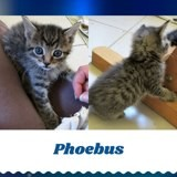 Phoebus, Chiot à adopter