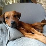 Olfy, jeune chien croisé non lof, Chien à adopter