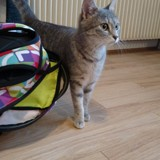 Alizee, Chaton à adopter